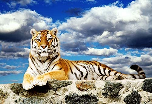 Zhy Tiger Photography Background 7X5FT Wild Animal Jungle Safari Green Lawn Grassland Photography Backdrop Studio Photo Booth Props GEEV376