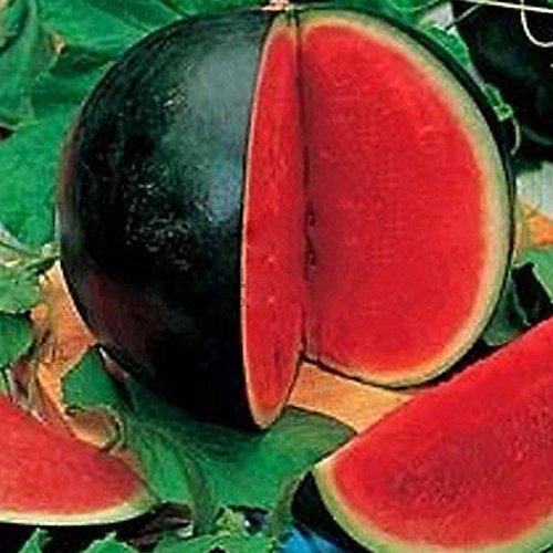 ADB Inc DD Sweet Juicy comestible Melon Big Noir Peau Rouge Seedless Watermelon Bio Graines