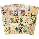 Knaid Vintage Style Postcard Set, Pack of 30 Botanical Plants Butterfly Mushroom Leaves Fruits Retro Postcards