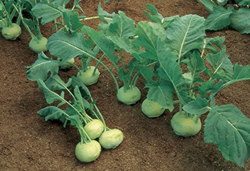 Kohlrabi is one of our unique vegetables