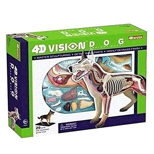 JTSYUXN Hund Anatomie Modell - Hund Skelett Anatomisches Modell - 4D Vision-Dog Modell Abnehmbare Organe Körperteile - für Medizinische Ausbildung Traning Hilfe, Puzzle Montage Spielzeug