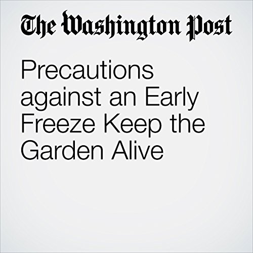 Precautions Against an Early Freeze Keep the Garden Alive cover art