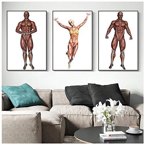 WSTDSM Muskelkarte Menschliche Körpermalerei Hängendes Bildplakat Leinwanddruckmalerei Wandkunst Wohnzimmer Hauptdekoration 20X28 In Kein Rahmen X3Pcs