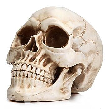 Readaeer Life Size Human Skull Model 1 1 Replica Realistic Human Adult Skull Head Bone Model