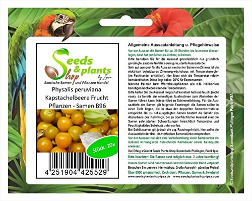 Stk - 20x Physalis peruviana Kapstachelbeere Frucht Pflanzen - Samen B96 - Seeds Plants Shop Samenbank Pfullingen Patrik Ipsa