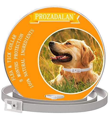 PROZADALAN Collare Antipulci Cane Impermeabile, Design Impermeabile e 8 Mesi Efficacia Collare Antiparassitario Antizecche Regolabile Naturale per Piccoli Animali Domestici di Taglia Media(63.5cm)