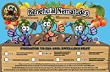 NaturesGoodGuys Beneficial Nematodes Steinernema feltiae SF - Biological Fungas Gnat Control (100 Million)