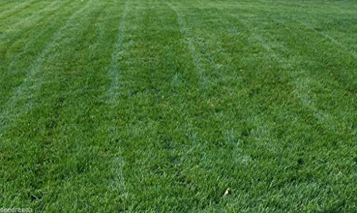 Titan Rx Turf Type Tall Fescue Grass Seed - 5 Lb.