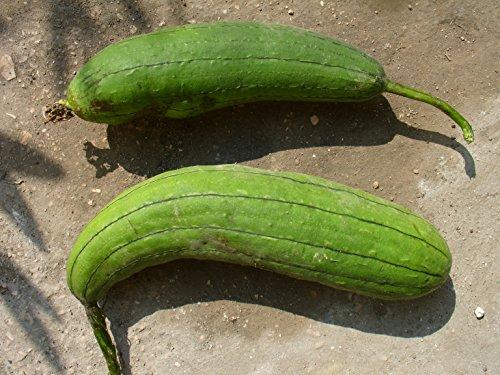 Luffa Cylindrica, Schwammgurke, Sponge Gourd, GRÜN, 10 Samen, von unserer ungarischen Farm samenfest, nur natürliche Dünger, KEINE Pesztizide, BIO hu-öko-01