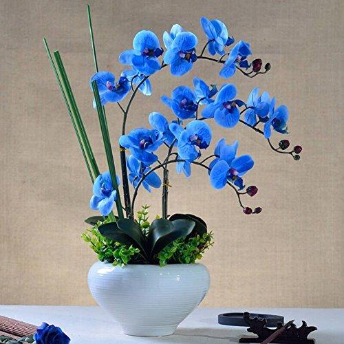 Doubleer 200 Pcs/sac Phalaenopsis Graines Papillon En Pot Semences Fleurs D'intérieur Bonsaï Quatre Saisons