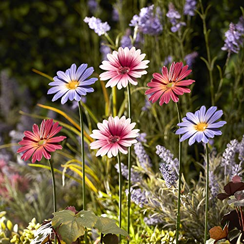Garden Gear Metal Daisy Stakes, Decorative Multicolored Ornament, Outdoor Novelty Flowers for Pathways, Patios & Borders, Height 57cm (6, Purple, Pink & Magenta)
