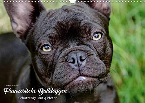 Französische Bulldoggen - Schutzengel auf 4 Pfoten (Wandkalender 2021 DIN A3 quer)