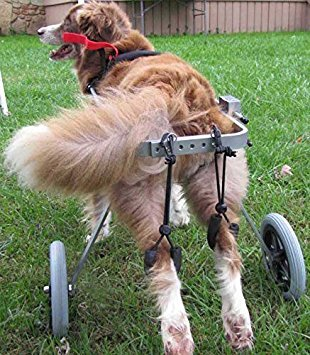 Newlife Mobility Adjustable Wheelchair for Medium-Built Dogs