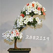 Sale! Fresh rhododendron seeds,150pcs/bag rare flower seeds beautiful garden plant bonsai the germination rate 95% high qualit