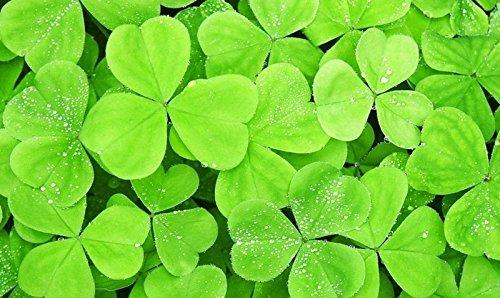 100pcs / lot de Magic Beans Growing Message Seeds Magic Bean brun anglais Magic Bean Bonsai Vert Décoration