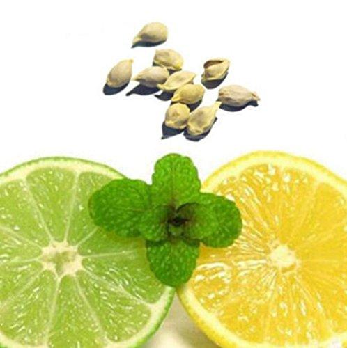 Foto de Comprar semillas de limonero para jard�n