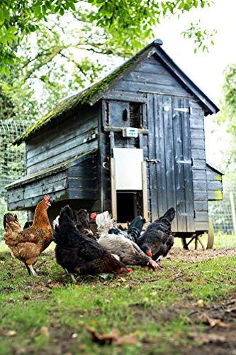 ChickenGuard Premium Türöffner - 9
