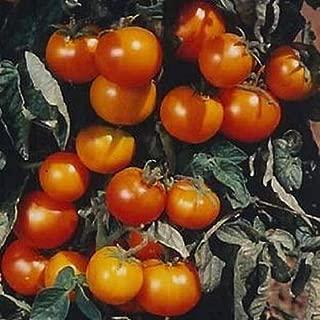 orange pixie tomato seeds