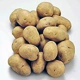 (北海道産) じゃがいも 男爵いも (規格外・M/LM混) 3kg じゃがいも 男爵 いも 超定番の ジャガイモ