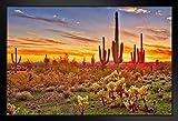 Farbiger Sonnenuntergang mit Saguaro-Kaktus, Sonoran,