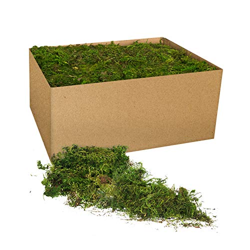 Royal Imports Fresh Dried Forest Green Moss, Naturally Preserved, Loose Chunks, 3 LB Bulk Case