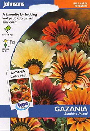 Johnsons Samen, Bildhaftes Paket Blume Gazanien Sunshine Mischung 25 Samen