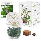 GROW2GO Mimosa Pudica Starter Kit de cultivo - Mini Invernadero, semillas de Mimosa y juego de plantación de tierra - idea de regalo sostenible para los amantes de las plantas