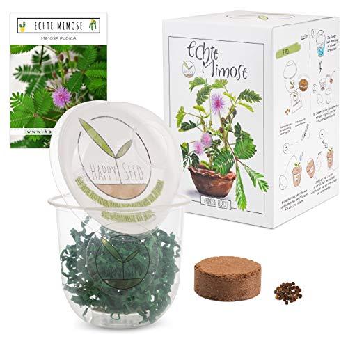 GROW2GO Mimosa Pudica Starter Kit - mini-serra, semi di mimosa e set per la semina in terra - idea regalo sostenibile per gli amanti delle piante