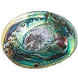 tl tongling conchiglie 12-14 cm lucido naturale abalone shells seashell home paesaggio acquario decorazione sapone porta sapone artigianale fatto a mano