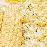 Snow Puff Hybrid F1 Popcorn Seeds (80 Seed Pack)