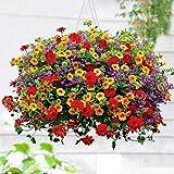 Semi Petunia Bellissimi fiori per piante da giardino Semi Misti Fiori per Bonsai,Mini Giardino, Balcone - Mixed 100pezzi