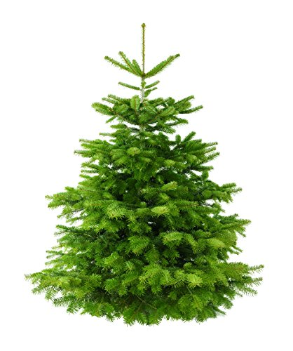 Echte Nordmanntanne Weihnachtsbaum Höhe: 160-180cm, frisch geschlagen, Premium Qualität