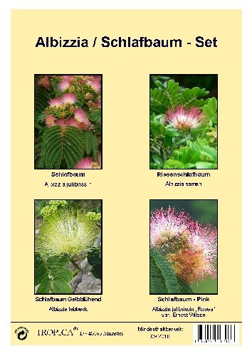 Tropica -Samenset - Schlafbäume - mit Samen vom Pinken, Gelben und Riesenschlafbaum