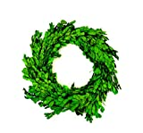 """Touch of Nature 12"""" Round Preserved Natural Boxwood Wreath, 1pc"""