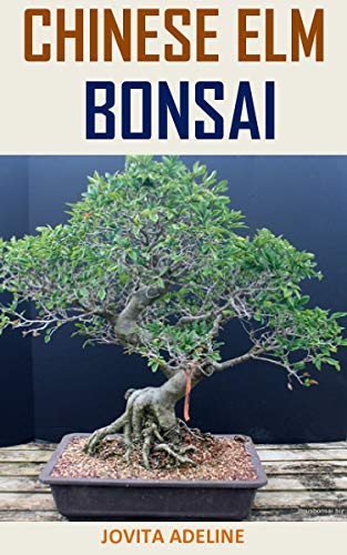 CHINESE ELM BONSAI: Discover the complete guides on everything you need to know about Chinese elm bonsai
