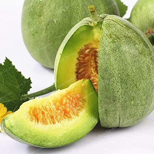 Bloom Green Co. Cucumis Melo Bonsai seltene exotische Goldene Melone Bonsai Pflanzengarten Gewächshaus Einpflanzen Juicy Xiang Gua Bonsai 50 PC: 4