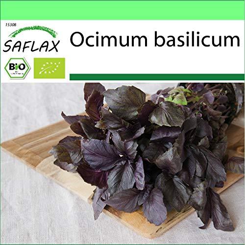 SAFLAX - Jardin dans la boîte - BIO - Basilic - Pourpre - 400 graines - Avec pot en argile, support, substrat de culture et engrais - Ocimum basilicum