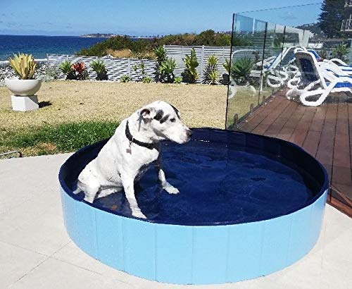 Waggabum are Specialist in XXL Premium Foldable Dog Swimming Pools - we Have a Bonus Cover and Carry Bag. The Dog Pool can Also be Used as a Portable Kiddie Pool Indoor and Outside or Dog Bathing tub