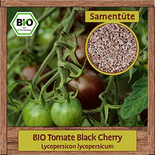 Samenliebe BIO Gemüse Samen Tomaten Black Cherry (Lycopersicon lycopersicum)   BIO Tomatensamen Gemüsesamen   BIO Saatgut für 15 Pflanzen