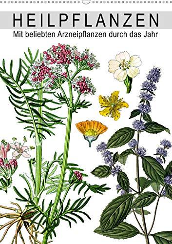 Heilpflanzen (Wandkalender 2020 DIN A2 hoch): Mit beliebten Arzneipflanzen durch das Jahr (Monatskalender, 14 Seiten ) (CALVENDO Gesundheit)