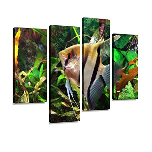 YKing1 Angelfish in Tropical Aquarium Angelfish Stock Pictures, Royalty Wall Art Painting Pictures Print On Canvas Stretched & Framed Artworks Modern Hanging Posters Home Decor 4PANEL
