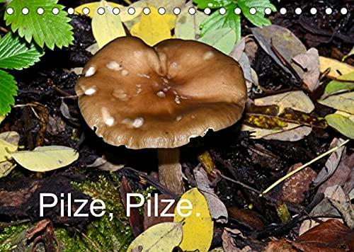 Pilze, Pilze (Tischkalender 2022 DIN A5 quer)
