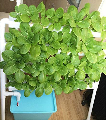Sistema de plantas de jardín 4 La capa 36 sitios verticales ...