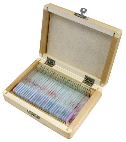 50 Bresser Dauerpräparate für Mikroskope in edler Holzbox