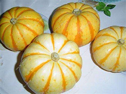 Graines de citrouille rares Cucurbita fil d'or de citrouille non-OGM légumes jardin Bonsai plantes ornementales semences Escalade 10 Pcs/sac 14
