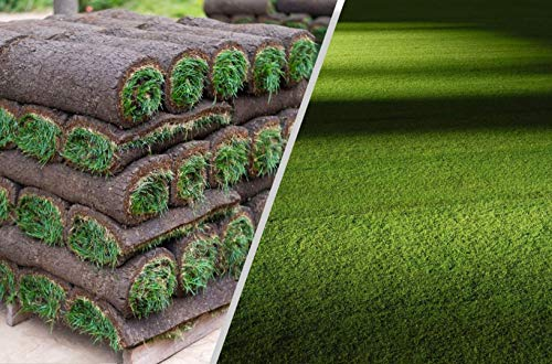 Rollrasen – 40m² echter Fertigrasen - Sorte: Premium Schattenrasen - Vorgedüngt - Frisch geschält - Gekühlt Geliefert (30 bis 500 qm verfügbar)