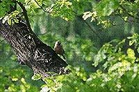 LHJOY 大人のための最も難しいジグソーパズル500ピース木の上の鳥の鳥動物子供のための誕生日プレゼントとホリデーギフト 52x38cm