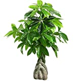 Hong Yi Fei-Shop Plantas Artificiales El árbol Artificial es de 39 Pulgadas de Altura, Hermosa y magnífica Fortuna Artificial, fácil de Limpiar. Plantas y Flores Artificiales