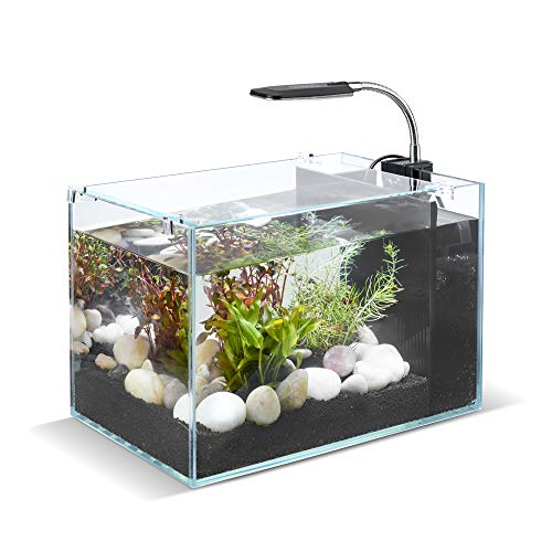 DaToo 5 Gallon Aquarium Betta Fish Tank with Low Iron Glass LED Light and Filter System