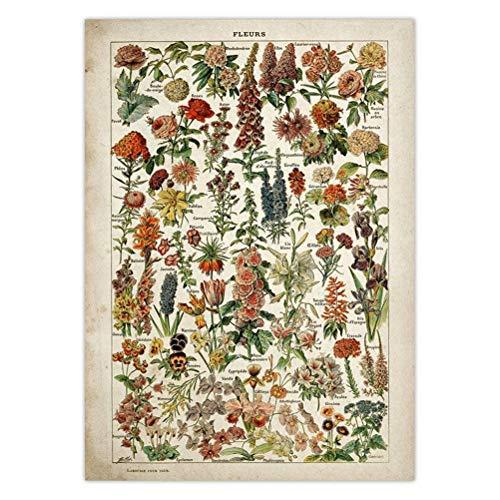 DFSDG Vintage Blume Poster Antike Blumendruck Kunst Botanische Pädagogische Plakat Pilz Wandkunst Wohnkultur Kraftpapier (Color : Style 4, Size : 50X75 cm)
